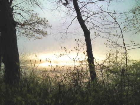 evening fog 2